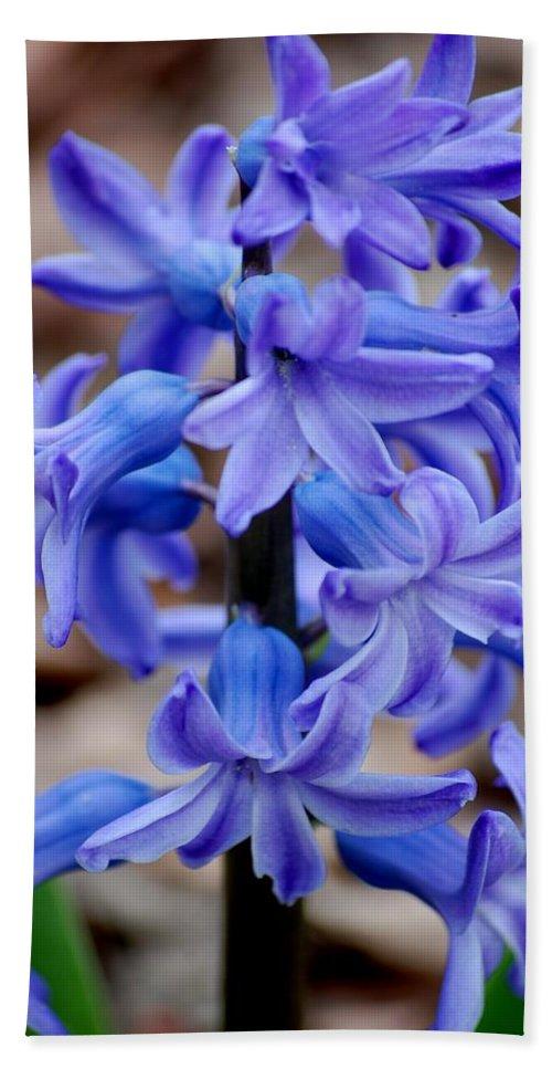 Digital Photography Beach Towel featuring the photograph Purple Hyacinth by David Lane