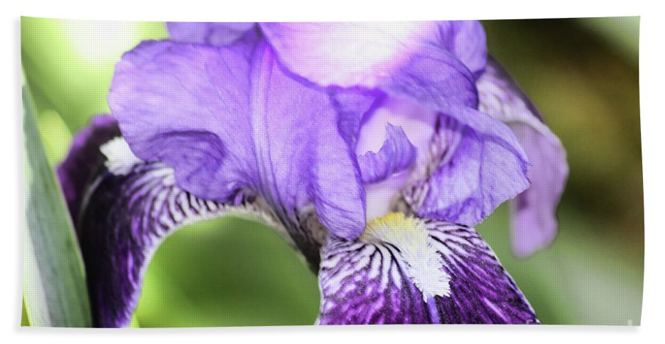 Elegant Beach Towel featuring the photograph Purple Iris by Alexander Butler