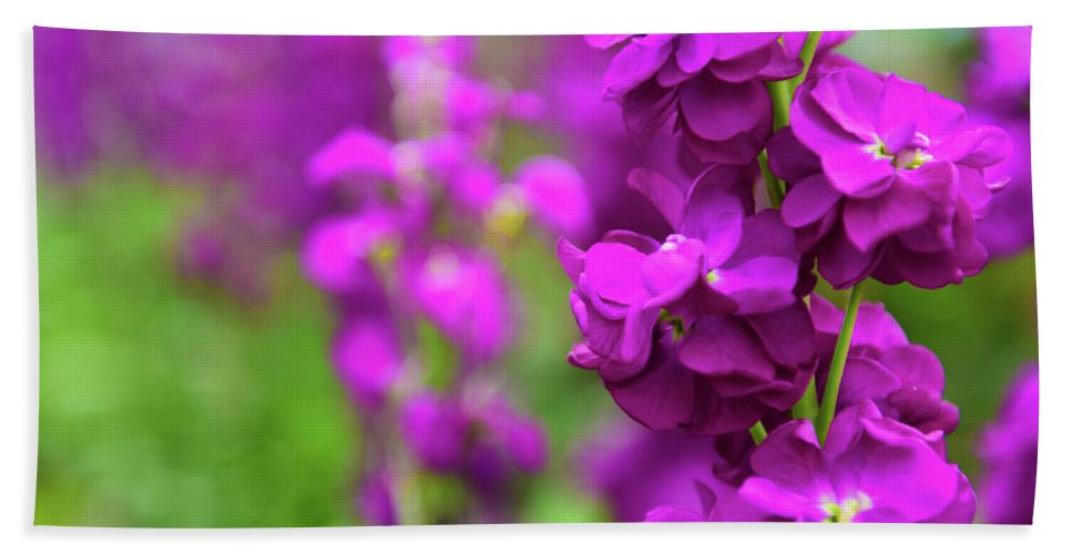 Flower Beach Towel featuring the photograph Purple by Kevin Williams