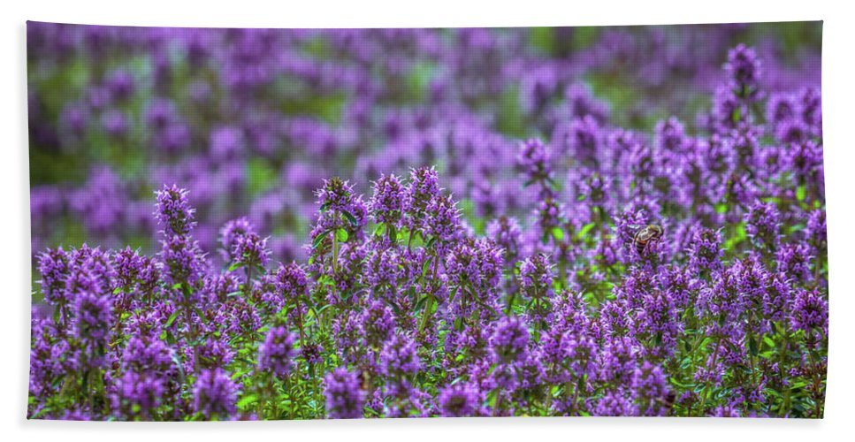 Meadow Beach Towel featuring the photograph Purple Meadow 3 by Lilia D