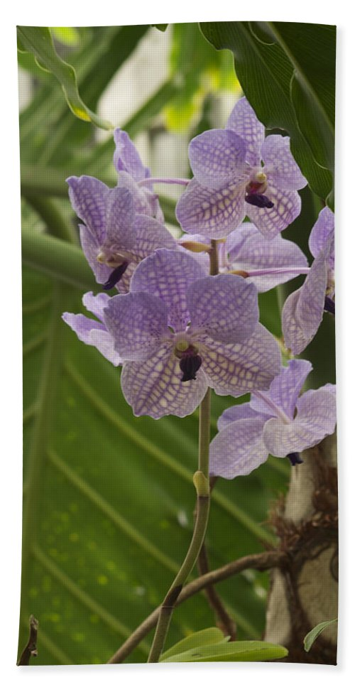 Purple Orchids Beach Towel featuring the photograph Purple Orchids 2 by Michael Peychich