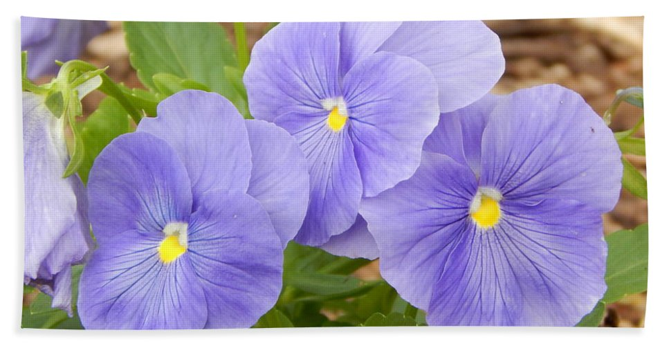 Purple Beach Towel featuring the photograph Purple Petunia by JoAnne Burgess
