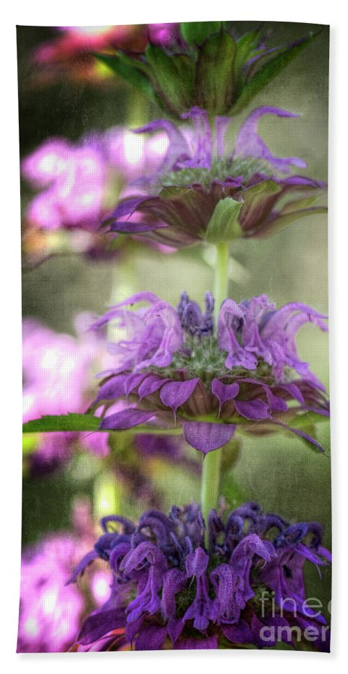 Lemon Beebalm Beach Towel featuring the photograph Purple Promises by Saija Lehtonen