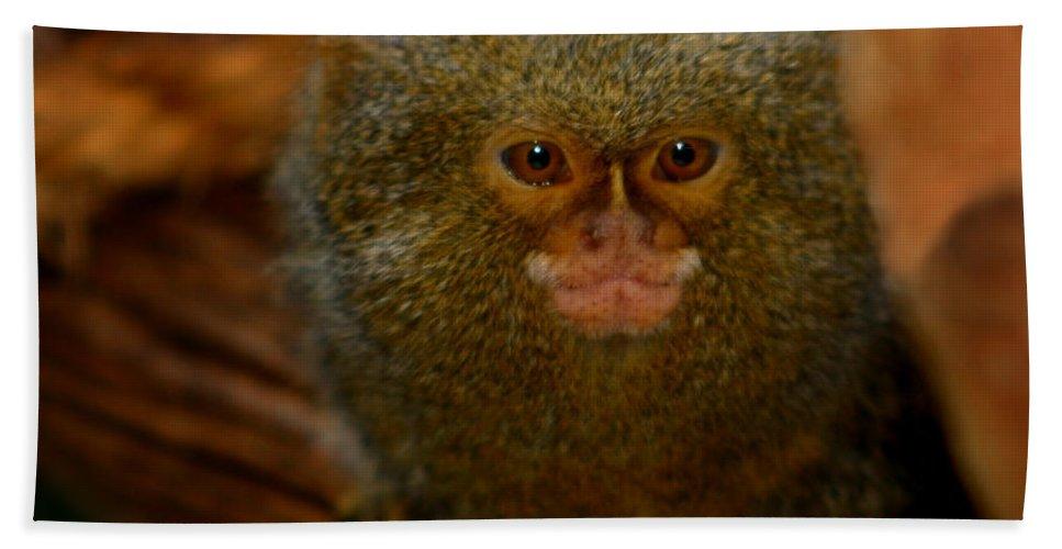 Pygmy Marmoset Beach Towel featuring the photograph Pygmy Marmoset by Anthony Jones