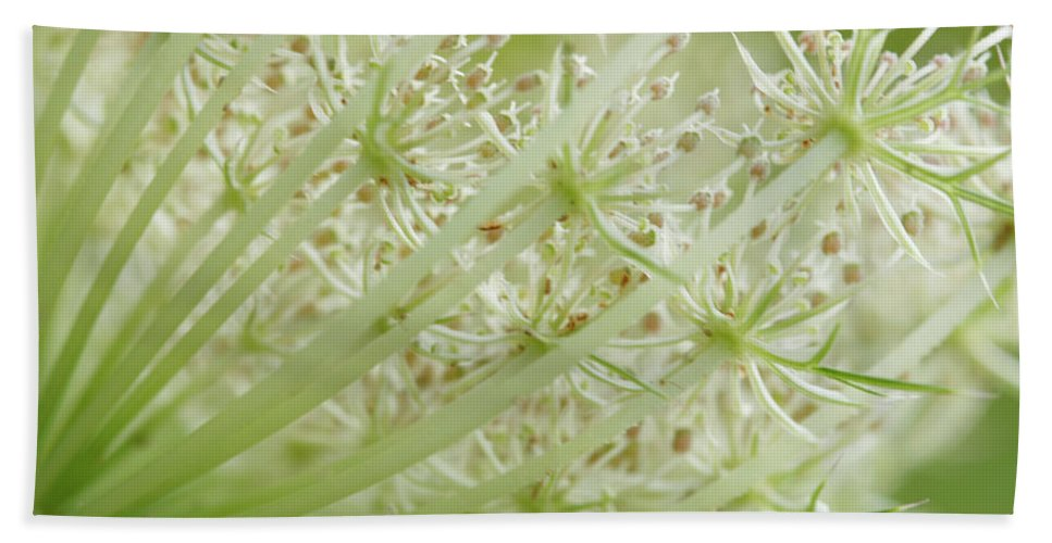 Cindi Ressler Beach Towel featuring the photograph Queen Anne's Lace by Cindi Ressler