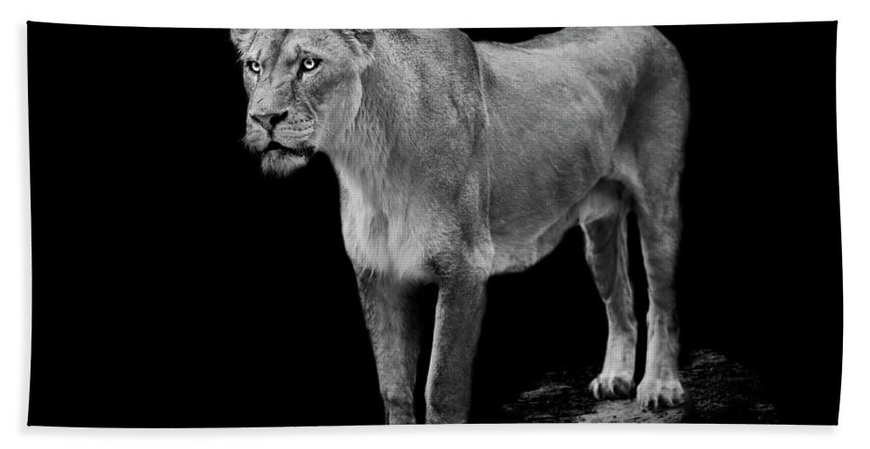 Lioness Beach Towel featuring the photograph Queen by Paul Neville