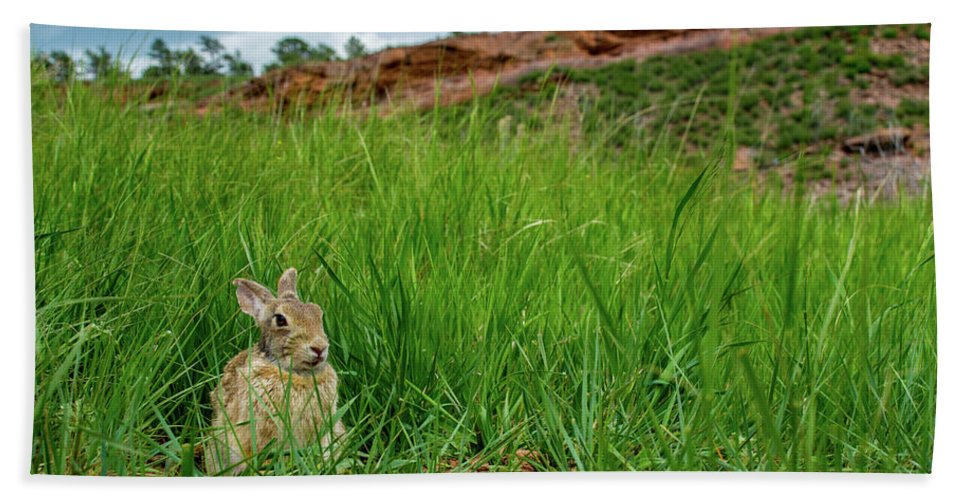 Animal Beach Towel featuring the photograph Rabbit In The Grass by Rob Lantz