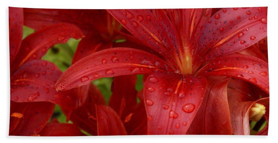 Rain Drops On Lilies Beach Towel featuring the photograph Rain Drops Keep Falling On My Head by Joanne Smoley