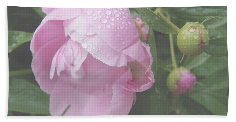 Floral Beach Towel featuring the photograph Rain On Peony by Kristi Ulrich