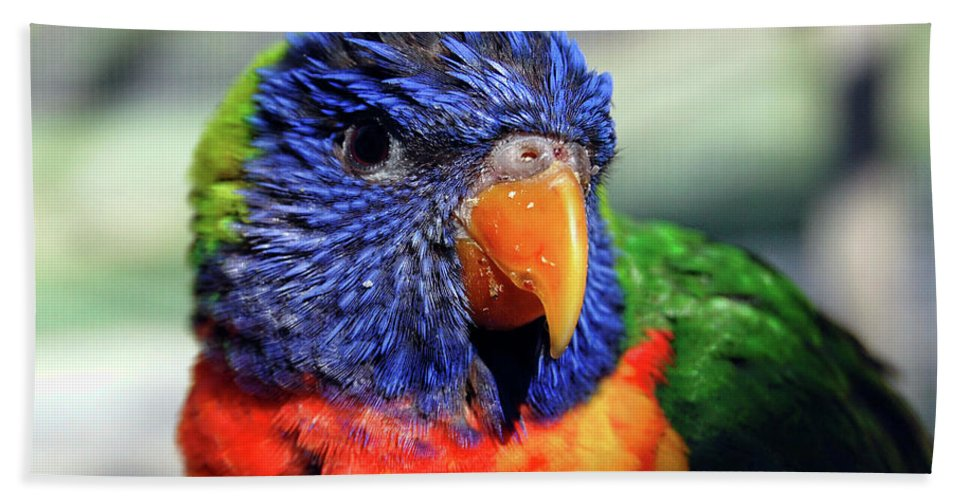 Rainbow Beach Towel featuring the photograph Rainbow Lorikeet by Amber Flowers