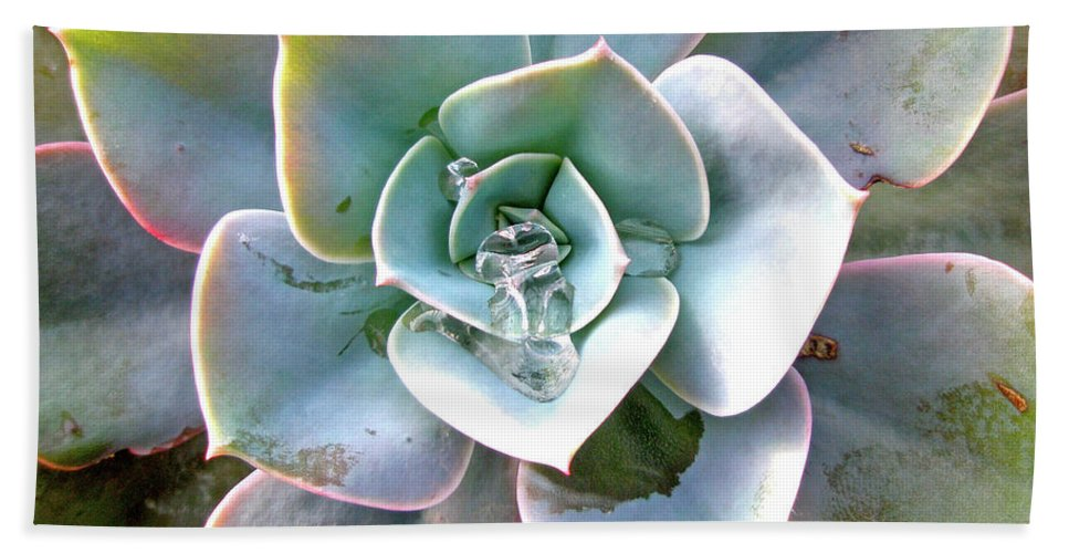 Succulent Beach Towel featuring the photograph Rainbow Succulent - My Cup Runneth Over by Mother Nature