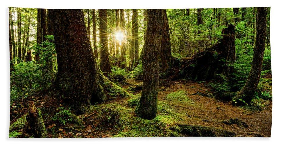 Rainforest Beach Towel featuring the photograph Rainforest Path by Chad Dutson