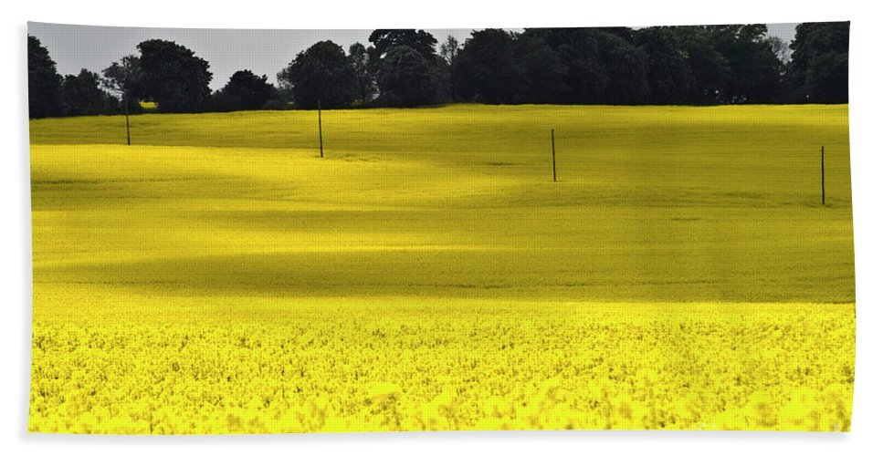 Heiko Beach Towel featuring the photograph Rape Field In East Germany by Heiko Koehrer-Wagner