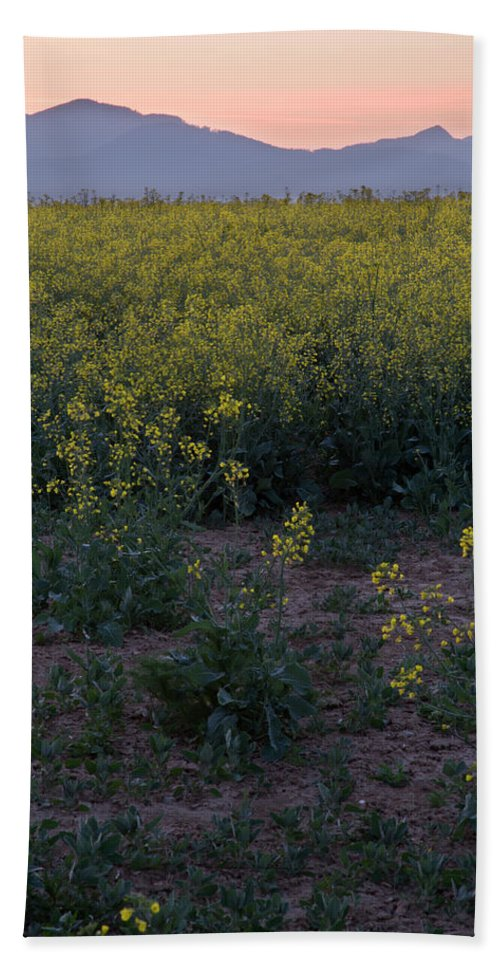 Brnik Beach Towel featuring the photograph Rapeseed At Dawn by Ian Middleton