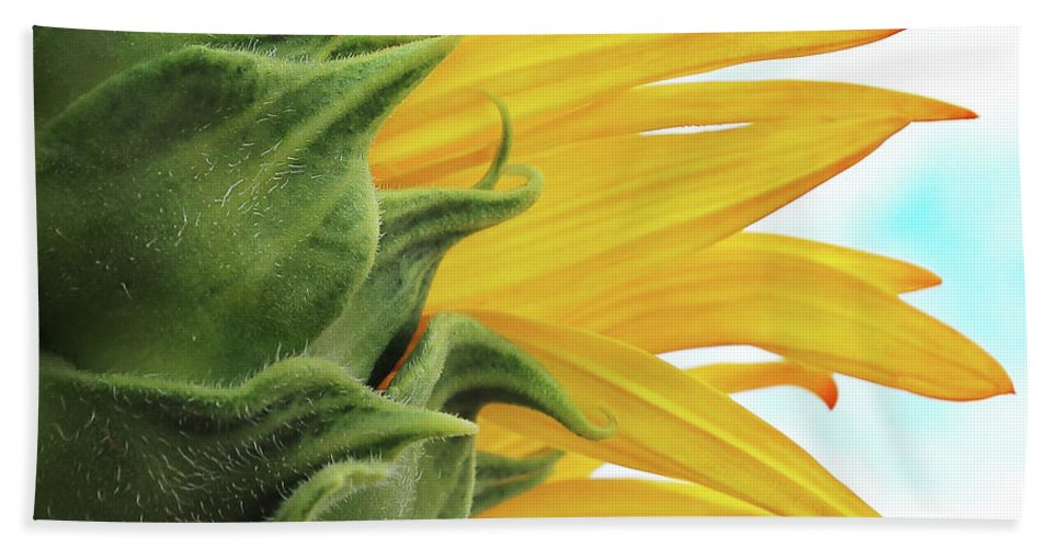 Reaching Beach Towel featuring the photograph Reaching For The Sky by Brian Gustafson