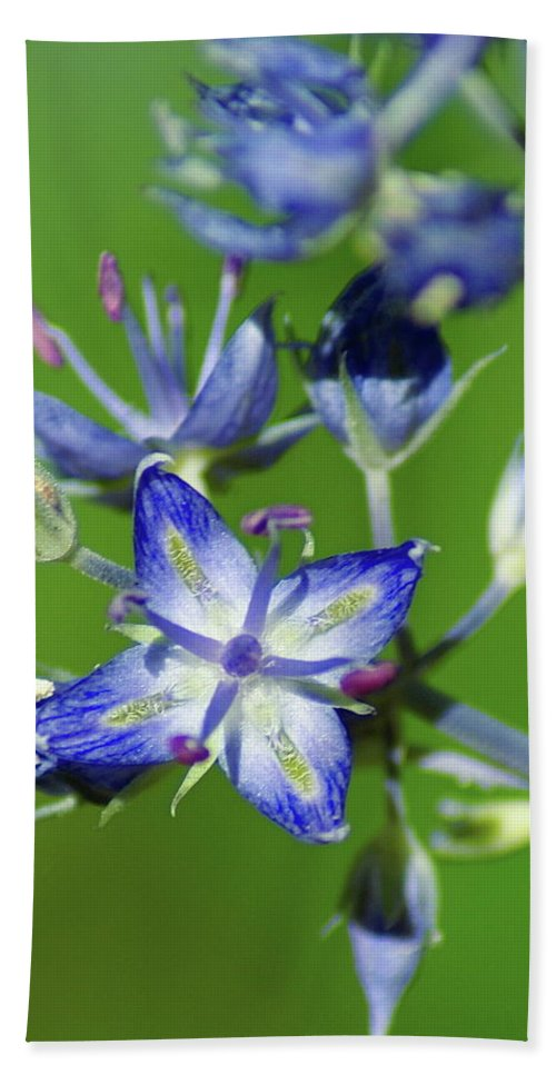 Flowers Beach Towel featuring the photograph Receiving Signals From Above by Ben Upham III