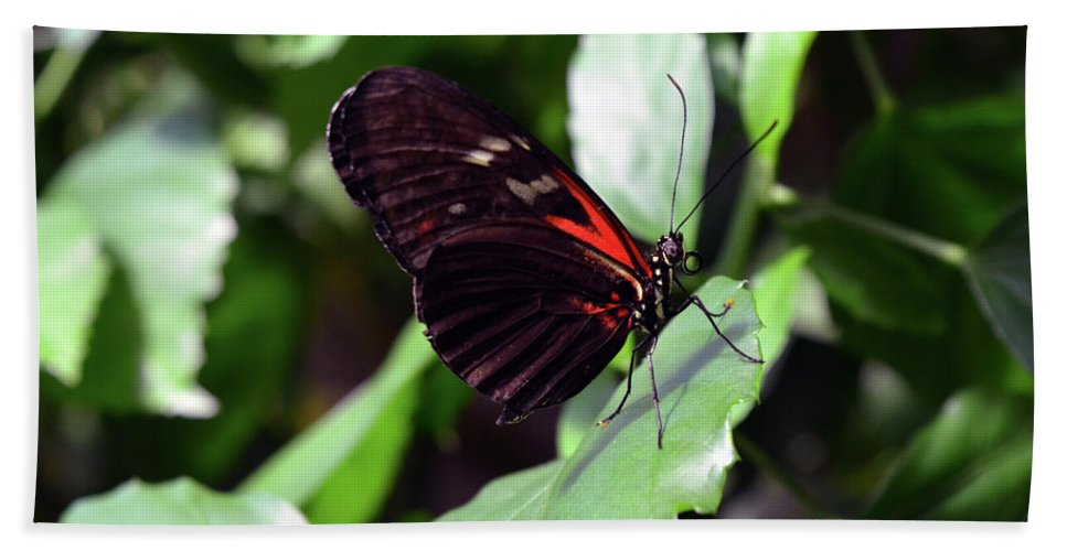 Butterfly Beach Towel featuring the photograph Red And Black Butterfly In The Garden by Oana Unciuleanu