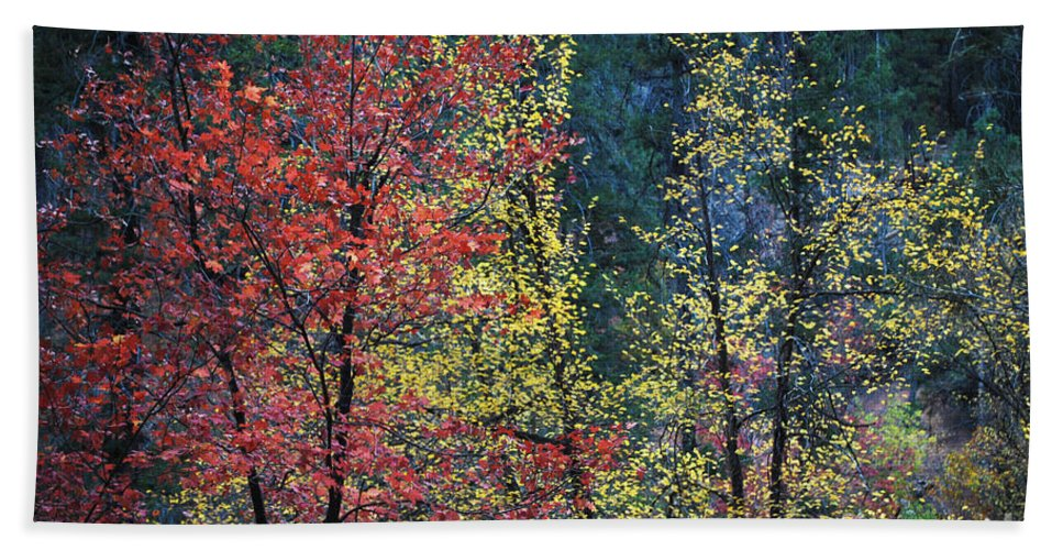 Landscape Beach Towel featuring the photograph Red And Yellow Leaves Abstract Horizontal Number 1 by Heather Kirk