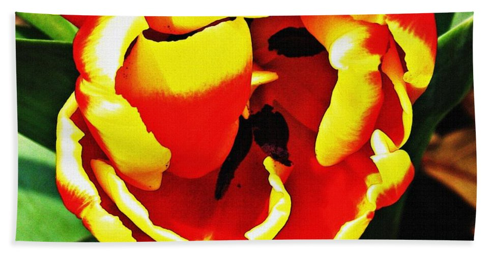 Tulip Beach Towel featuring the photograph Red And Yellow Tulip by Sarah Loft