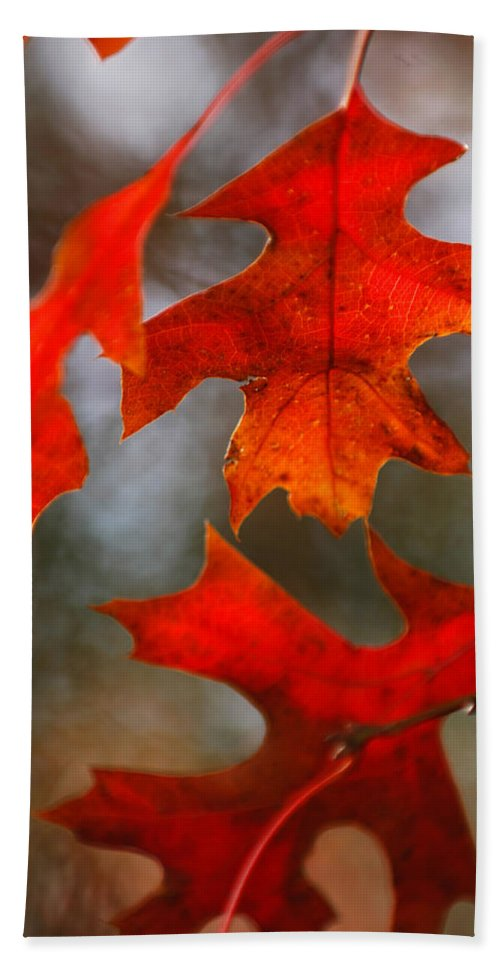 Fall Beach Towel featuring the photograph Red Autumn Leaves by Jill Reger