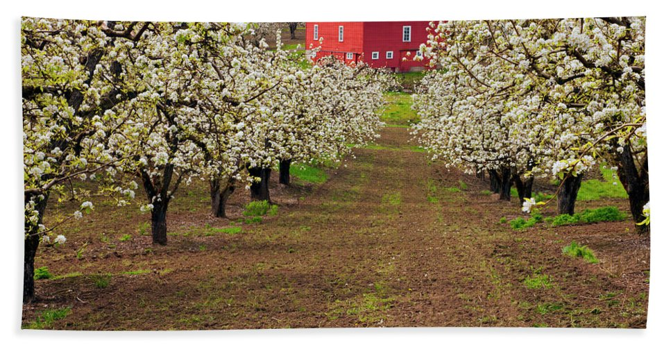 Barn Beach Towel featuring the photograph Red Barn Avenue by Mike Dawson