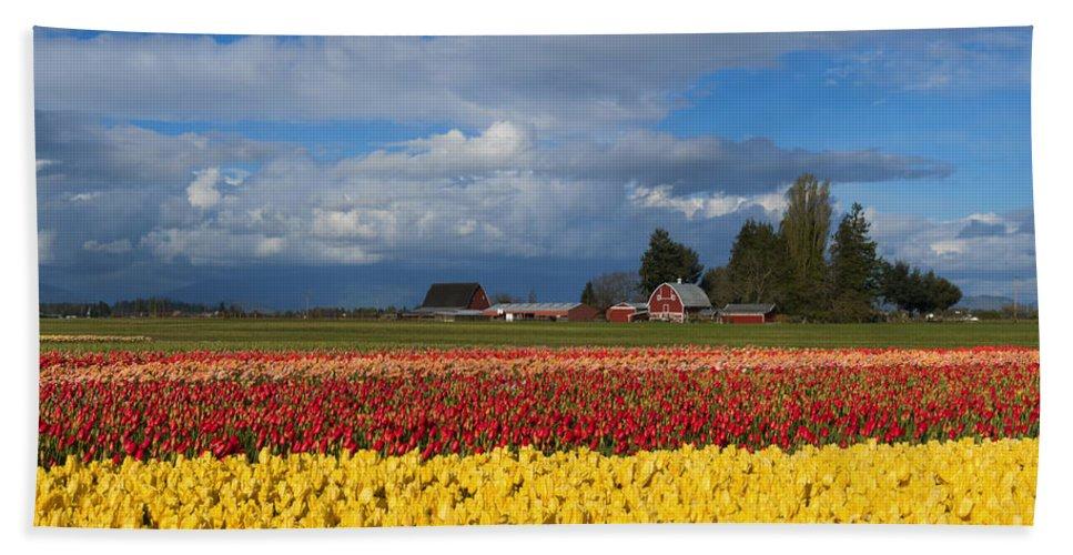 Red Barn Beach Towel featuring the photograph Red Barn Tulip Farm by Mike Dawson