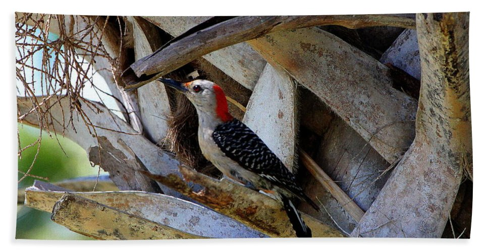 Red-bellied Woodpecker Beach Towel featuring the photograph Red-bellied Woodpecker Hides On A Cabbage Palm by Barbara Bowen