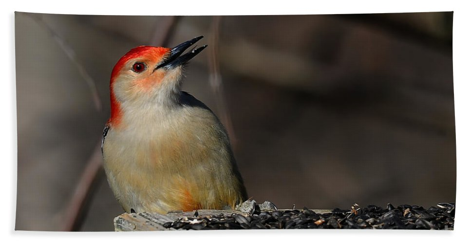 Woodpecker Beach Towel featuring the photograph Red-bellied Woodpecker by Lois Bryan