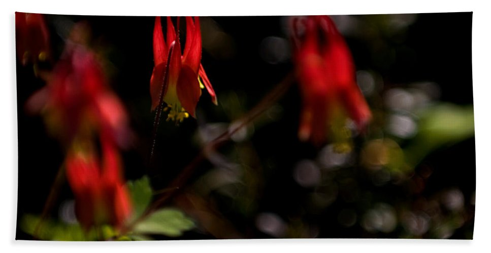 floral Beauty Beach Towel featuring the photograph Red Blaze by Paul Mangold