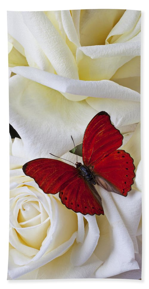 Red Beach Towel featuring the photograph Red butterfly on white roses by Garry Gay