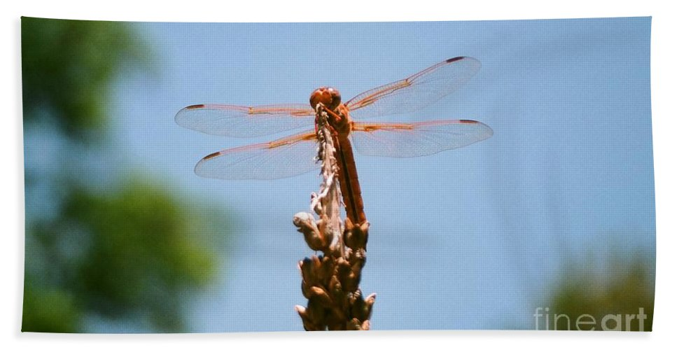 Dragonfly Beach Sheet featuring the photograph Red Dragonfly by Dean Triolo