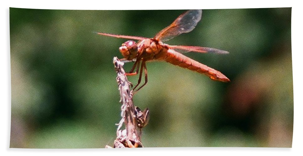 Dragonfly Beach Sheet featuring the photograph Red Dragonfly II by Dean Triolo
