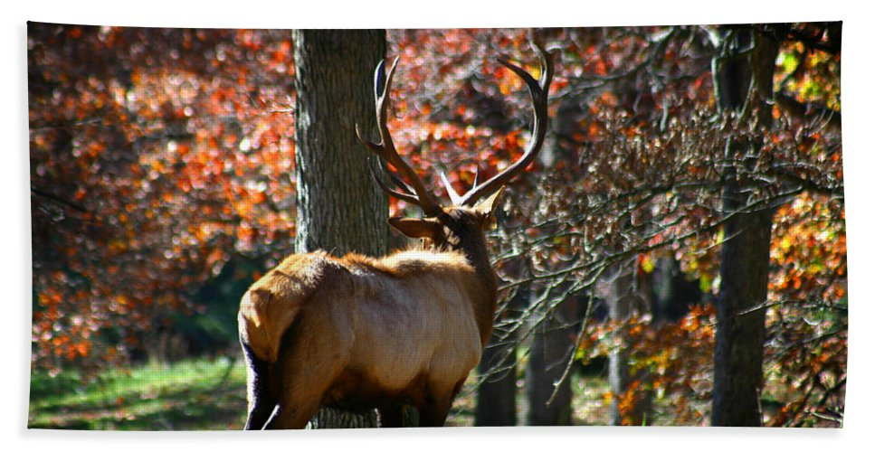 Elk Beach Towel featuring the photograph Red Elk by Anthony Jones