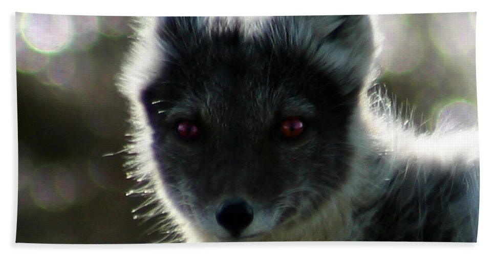 Arctic Fox Beach Towel featuring the photograph Red Eyes by Anthony Jones