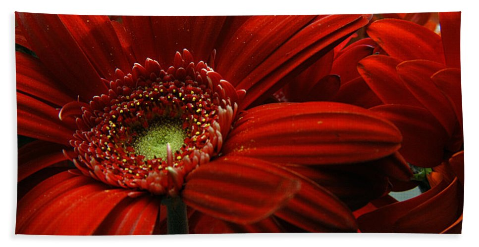 Clay Beach Sheet featuring the photograph Red Floral by Clayton Bruster