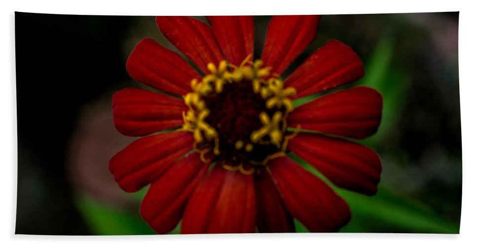 Orange Beach Towel featuring the photograph Red Flower 8 by Totto Ponce