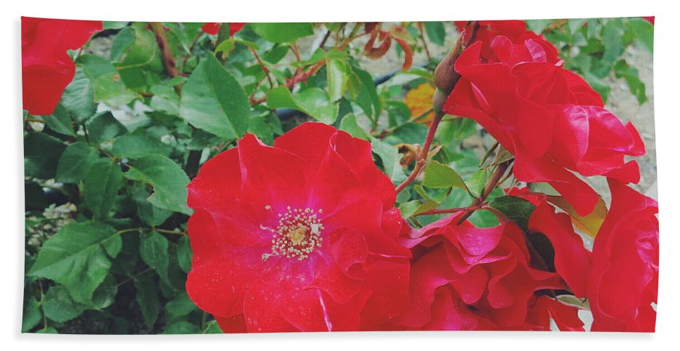 White Beach Towel featuring the photograph Red Flower by Km Sisters