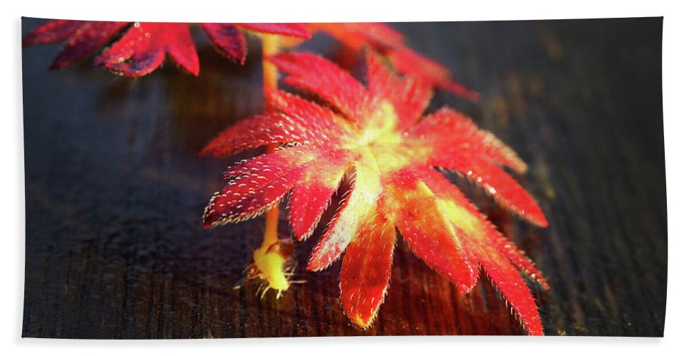Red Beach Towel featuring the photograph Red Flowers by Rene Larsen