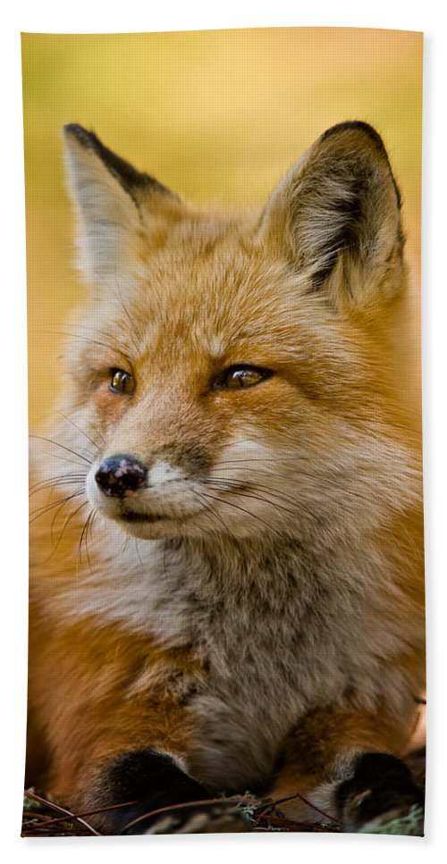 Red Fox Beach Towel featuring the photograph Red Fox Pictures 131 by World Wildlife Photography