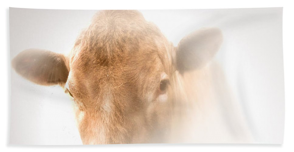 Red Heifer Beach Towel featuring the photograph Red Heifer by Valerie Anne Kelly