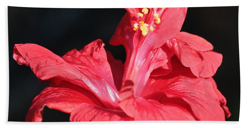 Red Hibiscus Beach Towel featuring the photograph Red Hibiscus Square 2 by Carol Groenen