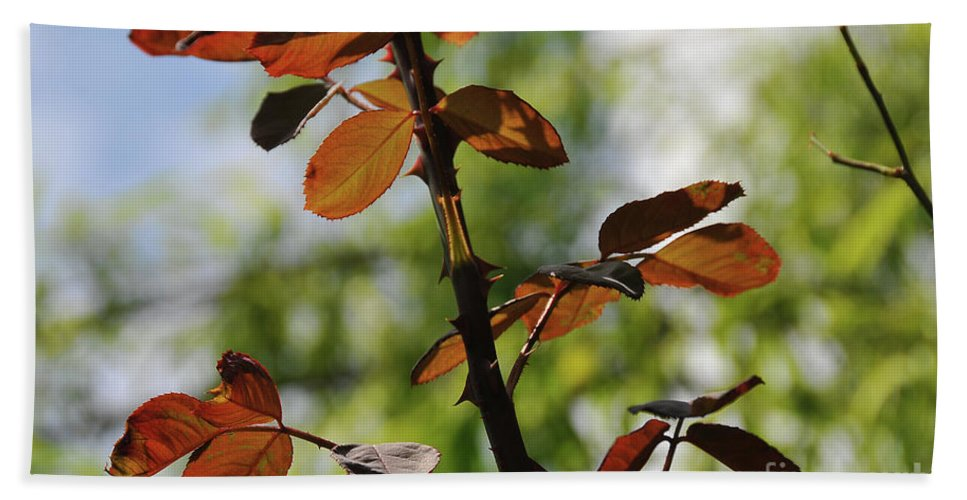 Foglie Rosse Beach Towel featuring the photograph Red Leaf by Ilaria Andreucci