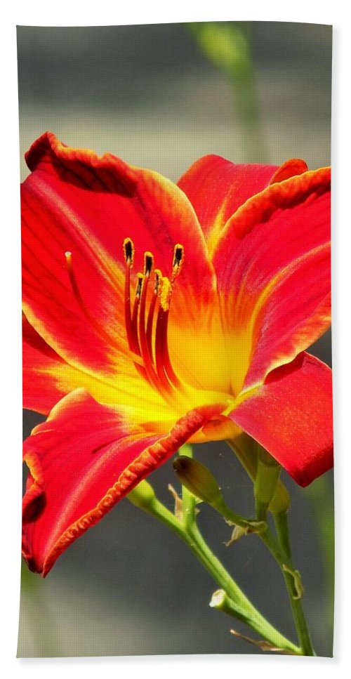 Red Beach Towel featuring the photograph Red Lilly by Sarah Barba