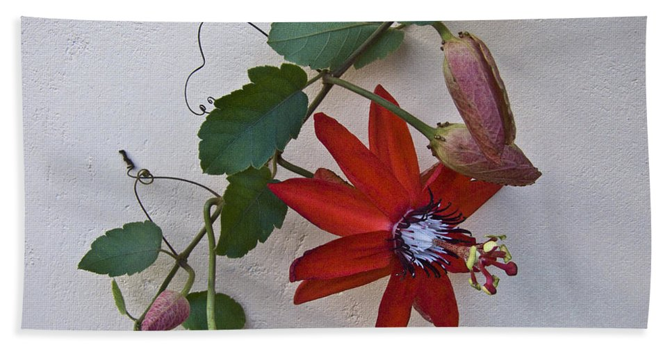 Nature Beach Towel featuring the photograph Red On White by Heiko Koehrer-Wagner
