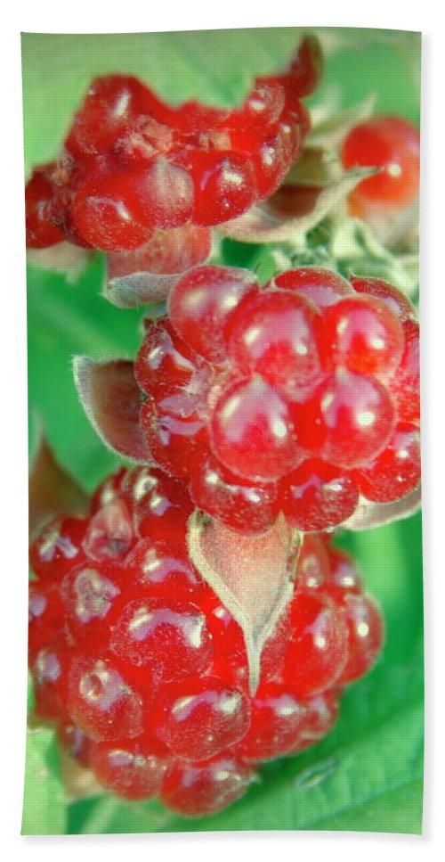 Raspberries Beach Towel featuring the photograph Red Raspberries by Sheila June Denson