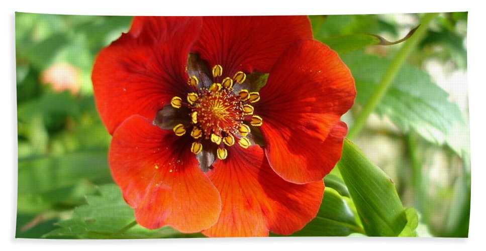 Flora Beach Towel featuring the photograph Red Red Bloom by Susan Baker