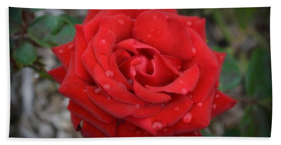 Red Beach Towel featuring the photograph Red Rose by Anella Harmeyer