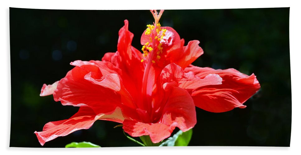 Hibiscus Beach Towel featuring the photograph Red by Sandi OReilly