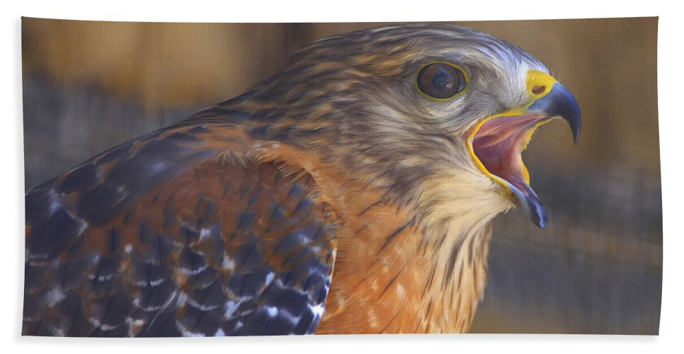 Bird Beach Towel featuring the photograph Red Shoulder Hawk by Deborah Benoit