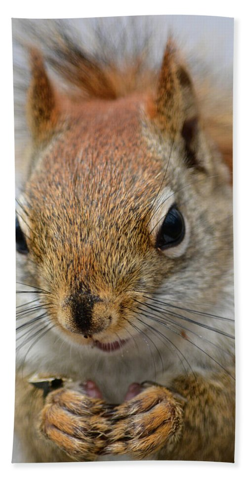 Red Squirrel Beach Towel featuring the photograph Red by Susan Ballard
